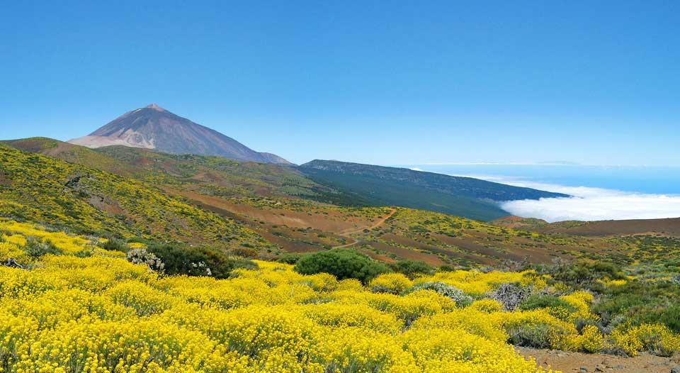 Parcul National Las Canadas - Teide