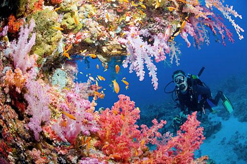 Corali_Marea_Rosie_Egipt1